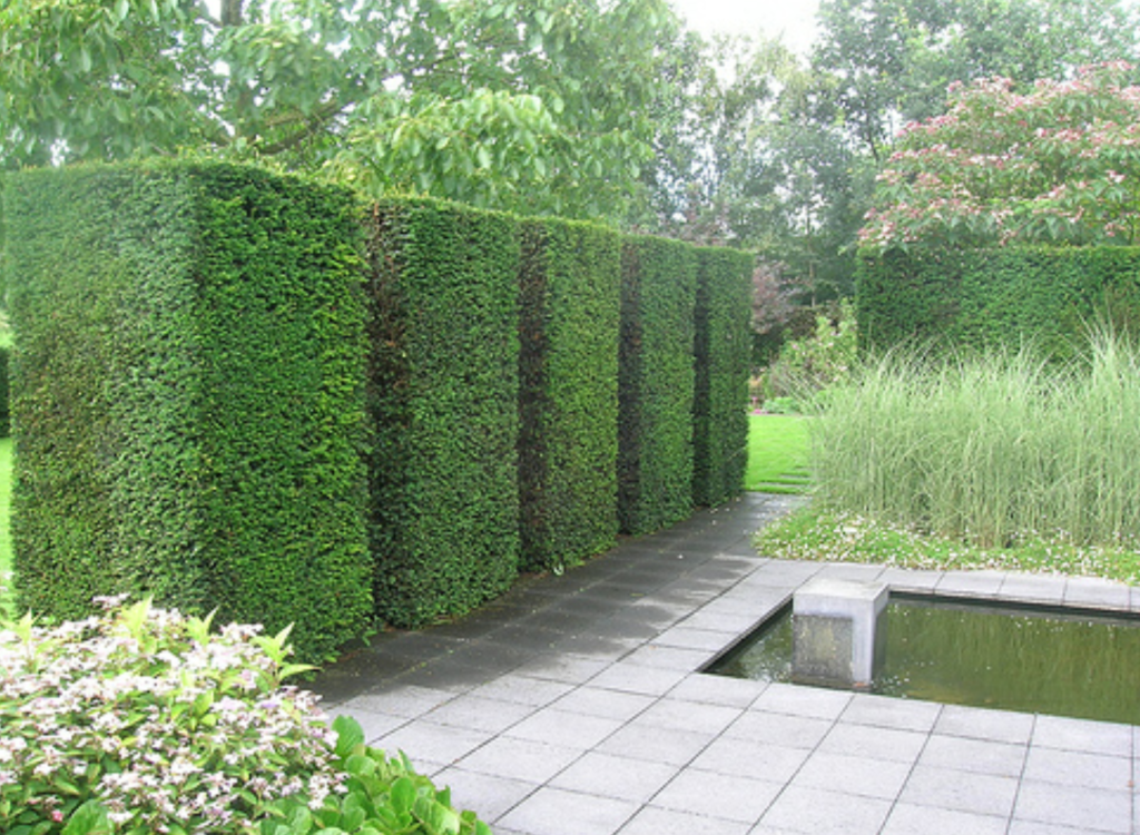Hedge cutting and soft landscaping