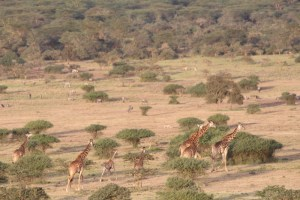 Lots of wildlife here: giraffe, wildebeest, zebra, eland, buffalo....