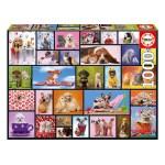 Cuy Games - 1000 PIEZAS - MOMENTOS COMPARTIDOS -