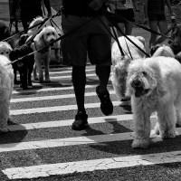 Crosswalk Dogs