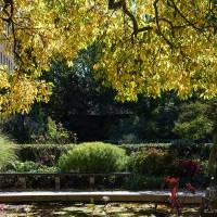 A Golden Canopy over a Secret Garden