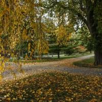Autumn Crossroads