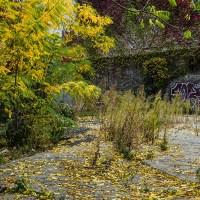 Urban Autumn