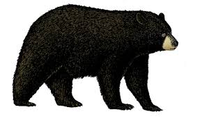 colored drawing of a black bear
