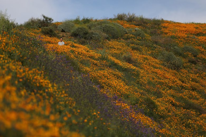 images/Wildflower Bloom/2017-03-15T025945Z_1_LYNXMPED2E054_RTROPTP_4_CALIFORNIA-FLOWERS