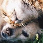 Mizzou Announces New Animal Research Adoption Partnership