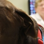Biomarker Test for Lou Gehrig's Disease Useful in Diagnosing Canine Neurodegenerative Disease