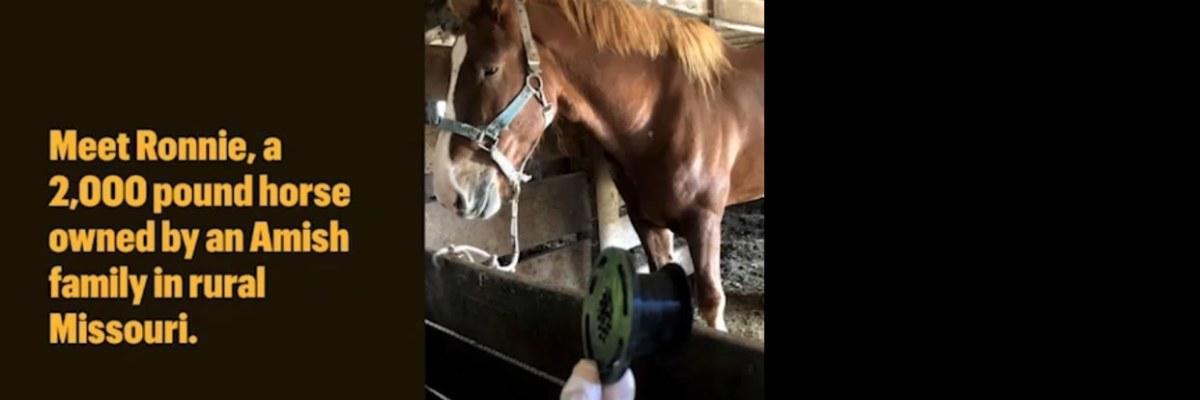 3D Printing Lets Amish Draft Horse Breathe Again