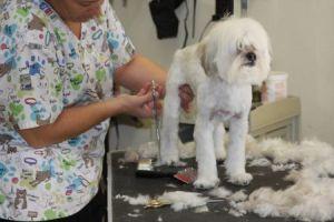 scissoring dogs leg grooming