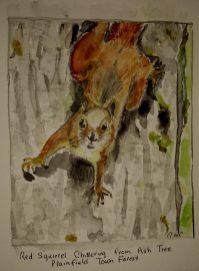 Rachel Walker Cogbill: Red Squirrel