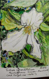 Rachel Walker Cogbill: Trillium Grandifolium