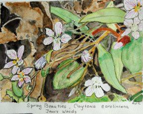 Rachel Walker Cogbill: Spring Beauties