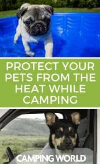 Protect your pets from the heat while camping
