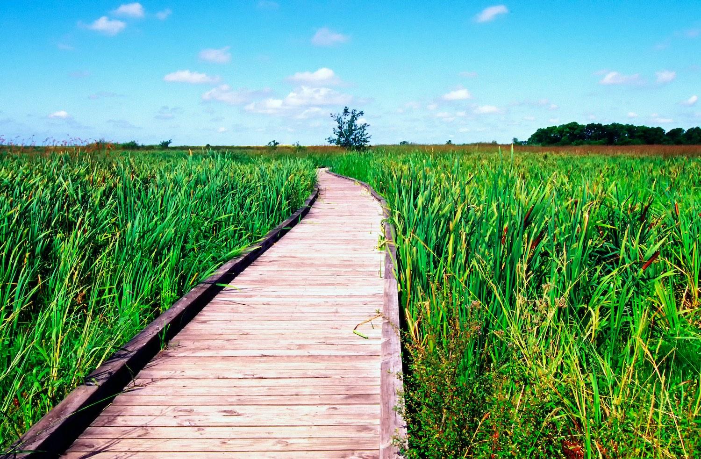 Creole Nature Trail, Louisiana
