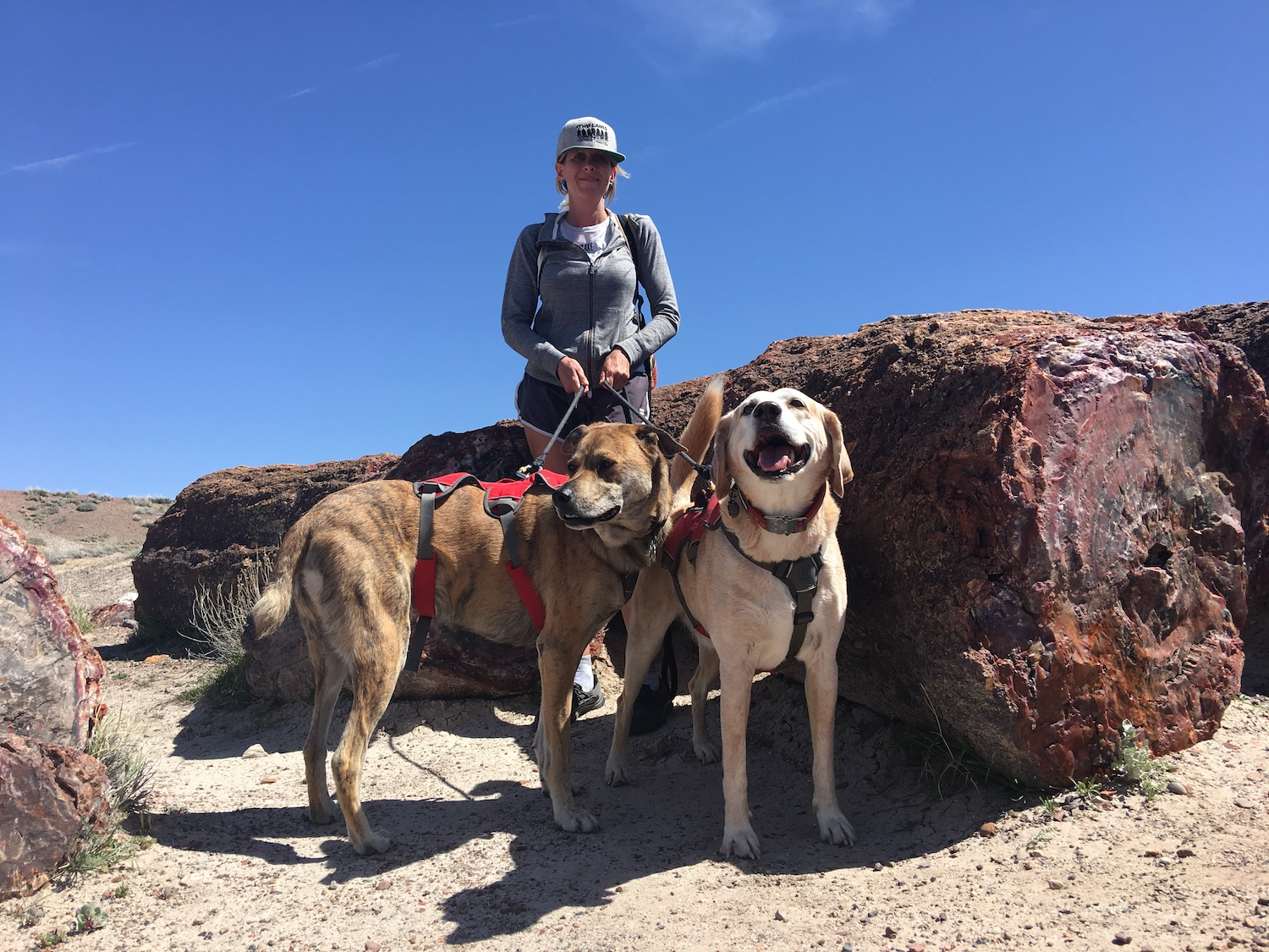 Petrified-Forest-national park with two dogs