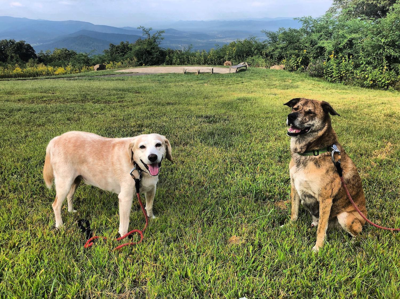 Shenandoah park is dog friendly.
