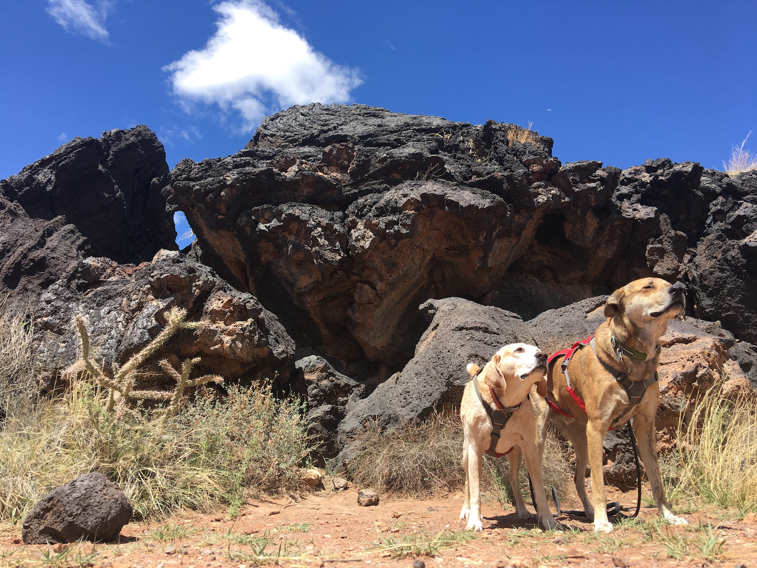Valley of Fires is dog friendly