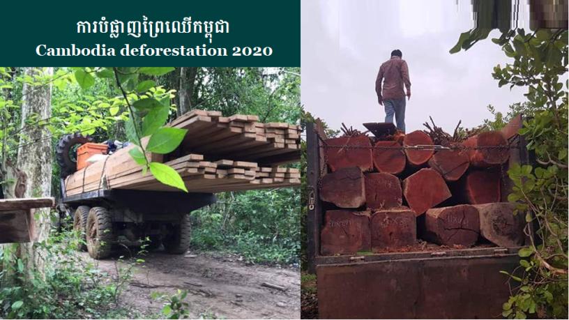 Cambodia deforestation 2020