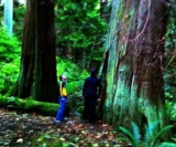 Port Coquitlam Arborists