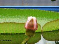 Jardín botánico Fundación Sales (7)