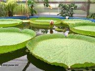 Jardín botánico Fundación Sales (8)