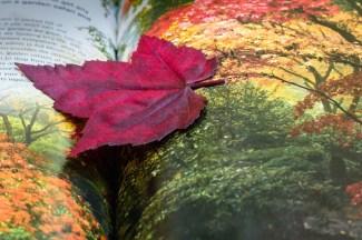 leaf_3