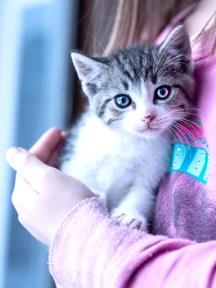 kittens_2 copy