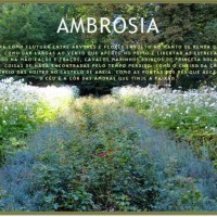 "Blogs - ""Ambrosia"""