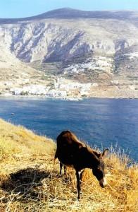 Amorgos : un âne veille sur la baie d'Aigiali