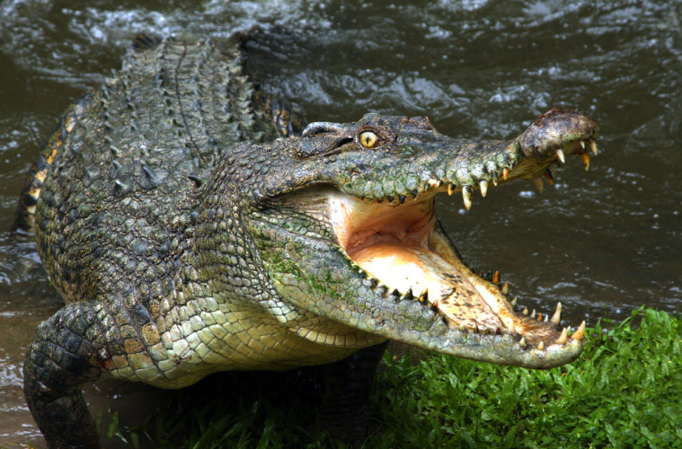 Man Killed By A Crocodile While Crossing A Flooded River