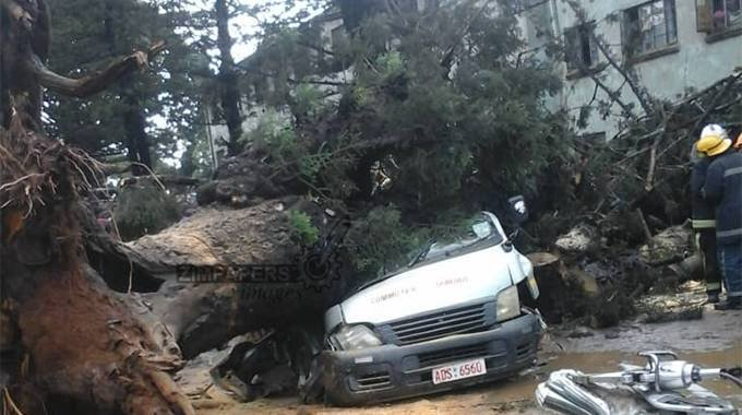 2 people die after tree crashes into kombi