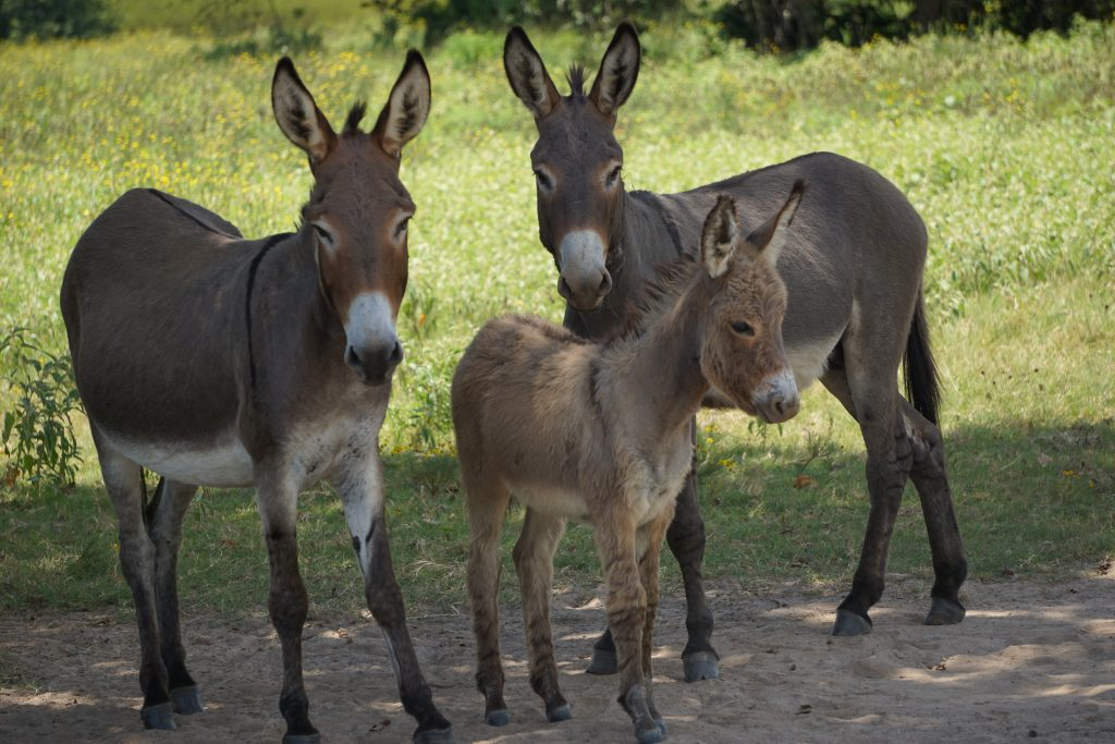 Tragedy As Father And Son Are killed Over Three Stolen Donkeys