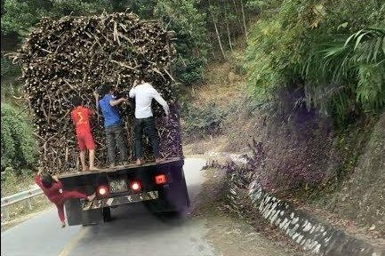 16-Year-Old Boy Dies While Pulling Sugarcane From Moving Truck
