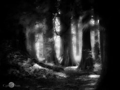 The woods are made for the hunters of dreams