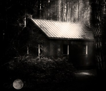 the shed enchanted