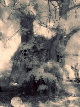 the old tree house