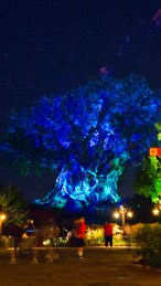 Tree Of Life @ Night