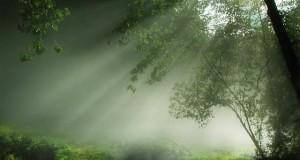 Beautiful-Nature-7