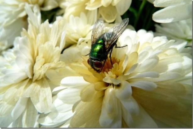 fly_on_mum