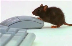 mouse calibration