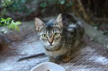 Cirmi, the adopted cat