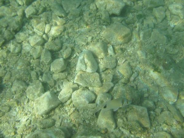 Underwater picture