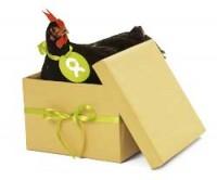 An Oxfam chicken in a box
