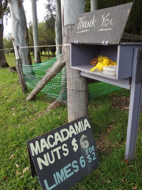 We probably would have gotten more use out of the lemons as macadamia nuts are hard to crack.