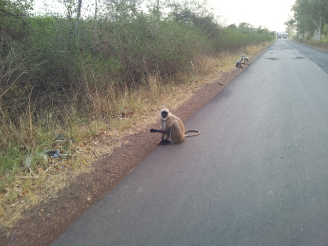 The first of many monkeys which lined the road.
