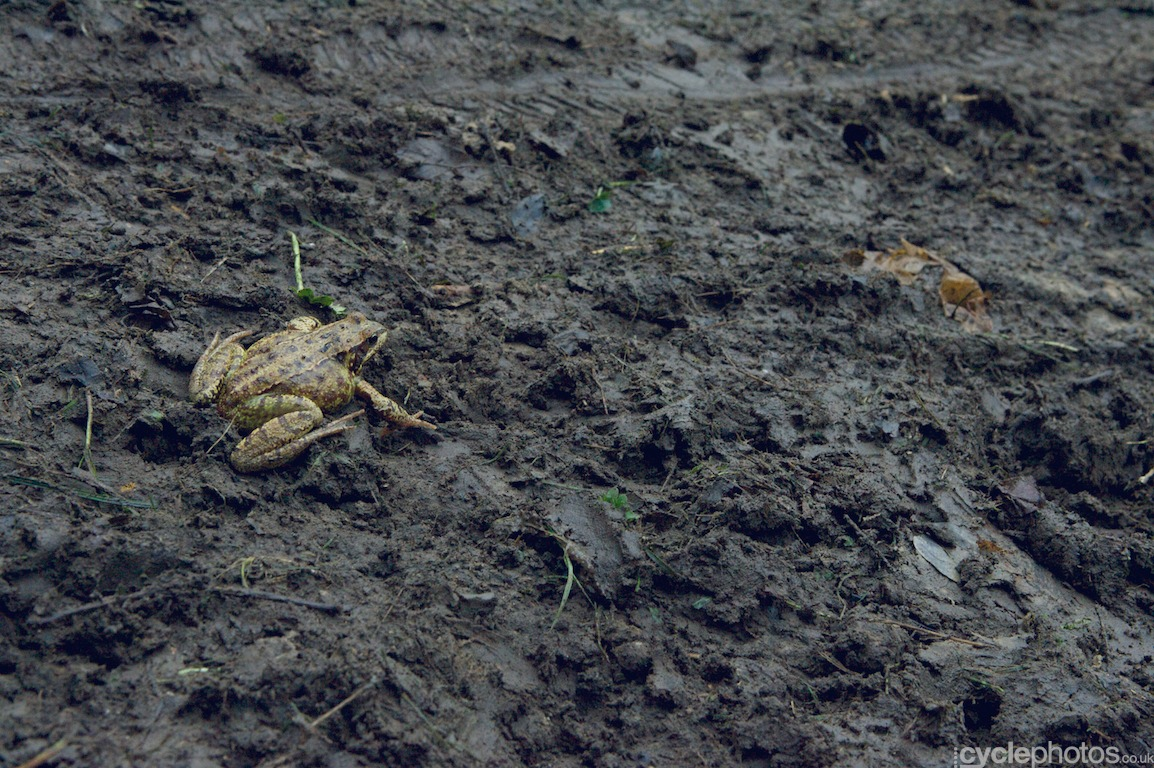 This poor frog somehow wondered onto the course, a few spectators made sure that it was removed swiftly