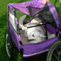Spa Pampering in a Dog's Life: Bakeries, Bike Trailers and More