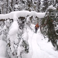 Snowshoeing: Humble Snow Steps in Canada's Vastness and History