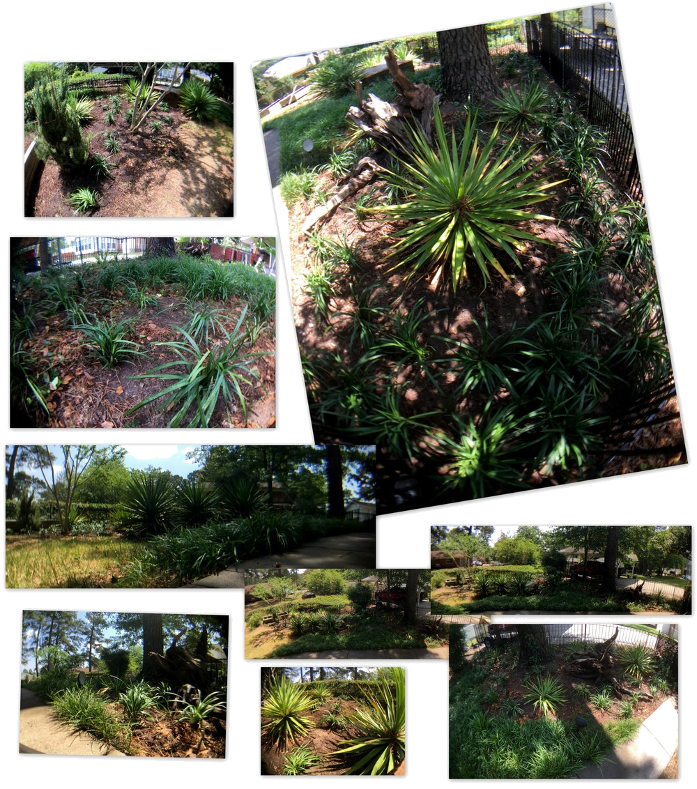 Photography ~ Backyard Landscaping–Added More Liriope [Monkey Grass] Collage, 05/22