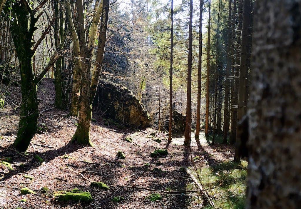 Bosco dell'anello del Monte Ciavac